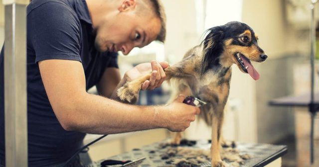 how much do dog groomers make